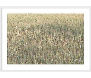 Italy - Reeds No 1