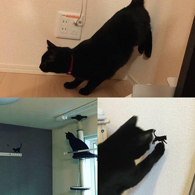 やっぱりおこめちゃんは、お友達がほしかったのかなぁ。いつも猫のシールを触って、見つめて。狩りの練習も毎日やりました。自ら編み出したかっこいいポーズをして、ネズちゅーさんを狙います。また遊びたいなぁ #愛猫 #くろねこ #黒猫 #おこめ #迷子 #猫 #埼玉県 #朝霞市 #保護猫 #探してます