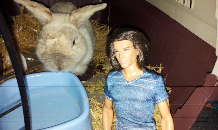 Stuart my rabbit and ken doll