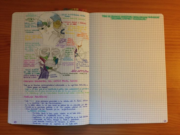 My anatomy revision notebook for neuromuscular systems of the head and neck. Doing this saved my ass.
