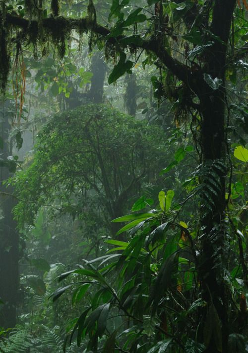 The humid and thick air of the tropical rainforest can have a smooth scent, also humid and thick, as soil, as rain, as fauna, as flora. Is just an exquisite and complex mix! #travel #sense