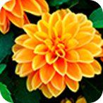 #plantas #todoparamijardín