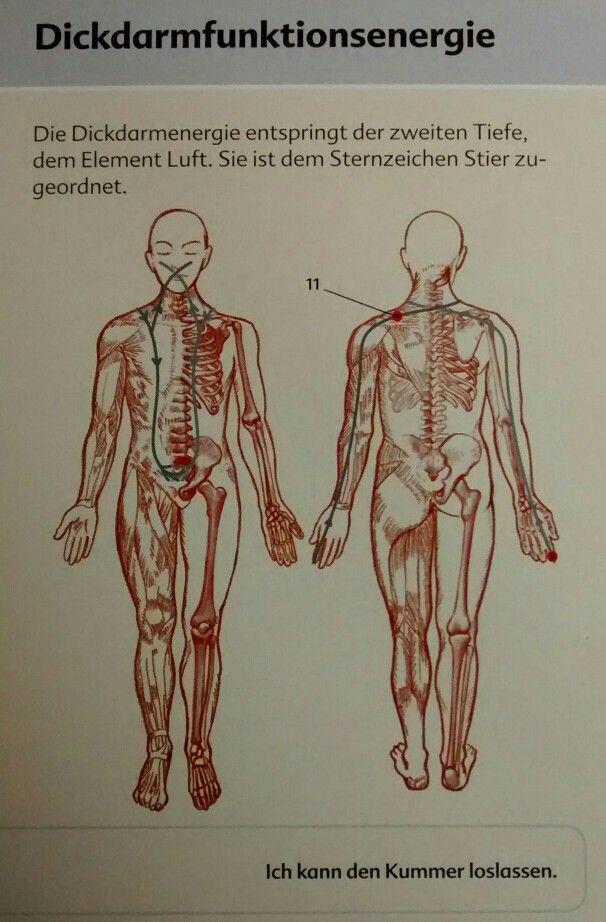 Atemberaubend Makroskopischen Anatomie Des Weiblichen ...