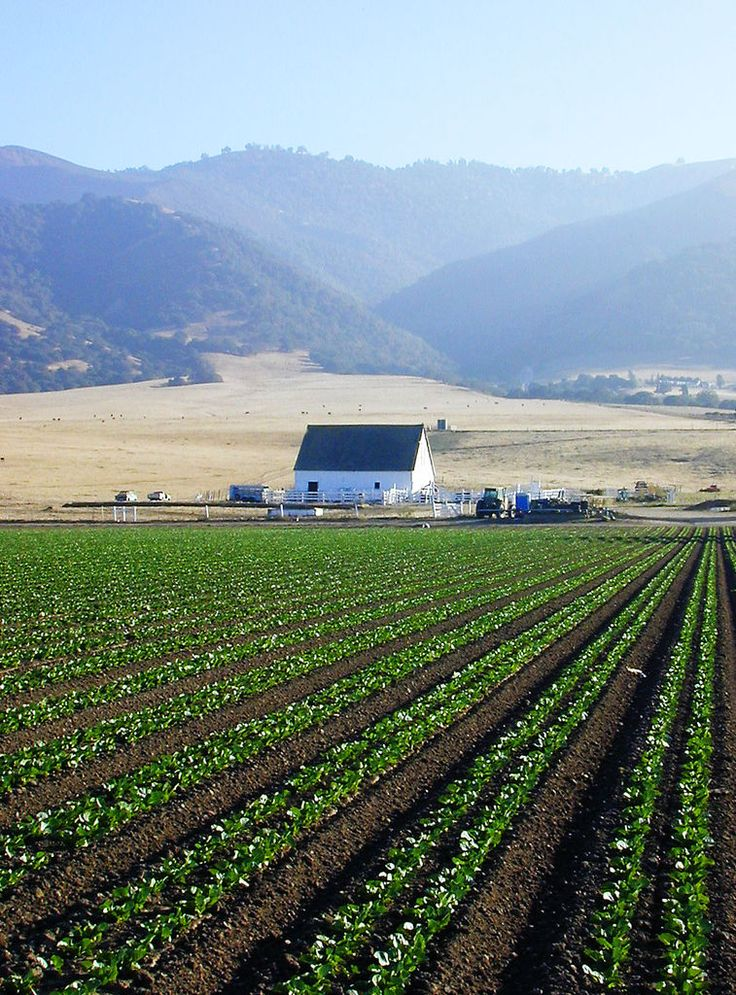 River Road, Salinas Valley, CA.  Fields & miles of crops grown right here in the Salinas Valley.