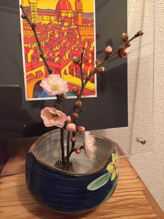 実家からもらってきた早咲きの梅 良い匂いがしています
