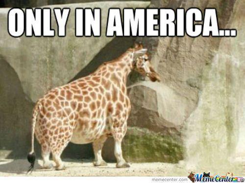 funny giraffe memes | Fat Giraffe Memes - 837 results