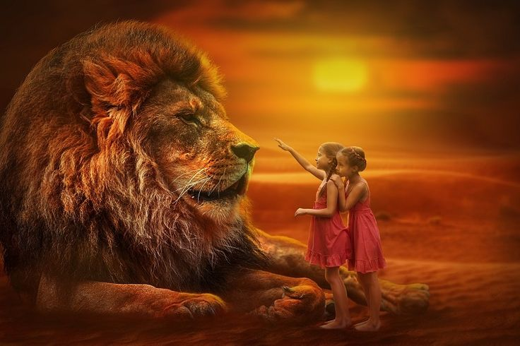 A sámánizmusból ismert erő- vagy totemállatok megjelenhetnek egy látomásban, egy meditáció alatt, vagy az álmainkban. Minden erőállat valójában egy testet öltött energia, amely üzenetet hordoz a számunkra.
