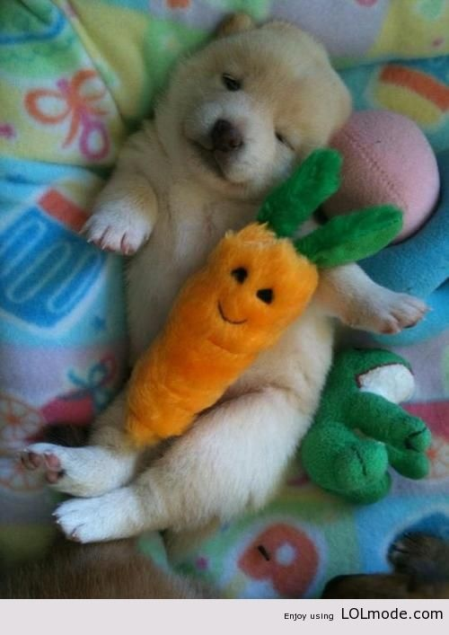 Terribly Cute - Cute Pictures, Dog Pictures, Animal Pictures, Cat Photos, Baby