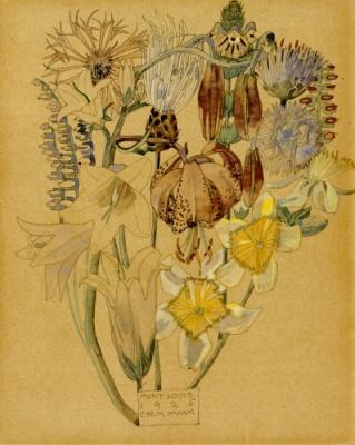 Mont Louis - Flower Study, 1925.    by Charles Rennie Mackintosh