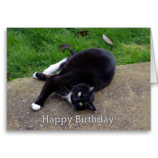 Cat Humour Birthday