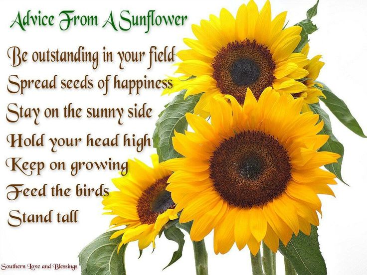 Great Advice from a sunflower