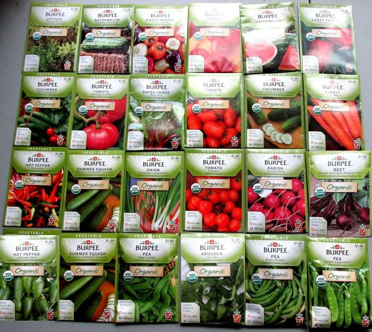 Burpee ORGANIC Seeds  (  Vegetable )    24 NEW Packets Packaged for 2015   $$$$