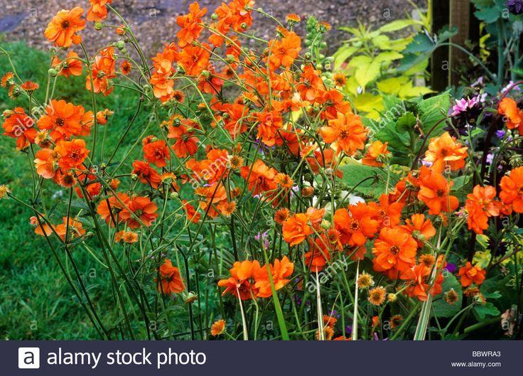 Mejores 28 imágenes de Gardening - Geum en Pinterest | Cultivo de ...