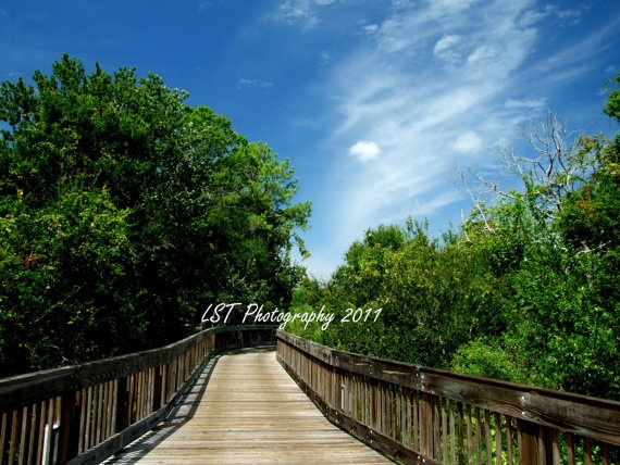 Florida Botanical Gardens Walkway  8X10 Color by LSTPhotography, use coupon code Pinned15 to save 15% off your entire purchase