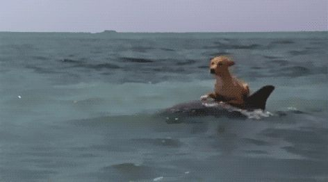 The life aquatic!