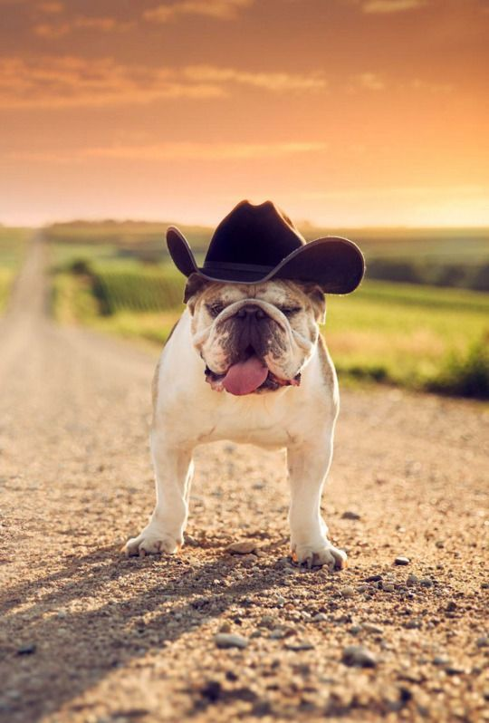 Great Car Alarm Installation Wiring Diagram Small Guitar 3 Way Switch Flat 2 Wire Car Alarm Ibanez Dimarzio Youthful Tele 3 Way Switch BlueAdding An Electrical Circuit 135 Best Bulldog We Love Images On Pinterest   Bull Mastiff ..