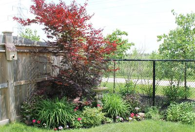 Please vote for this entry in Halton Blooms Photo Contest!