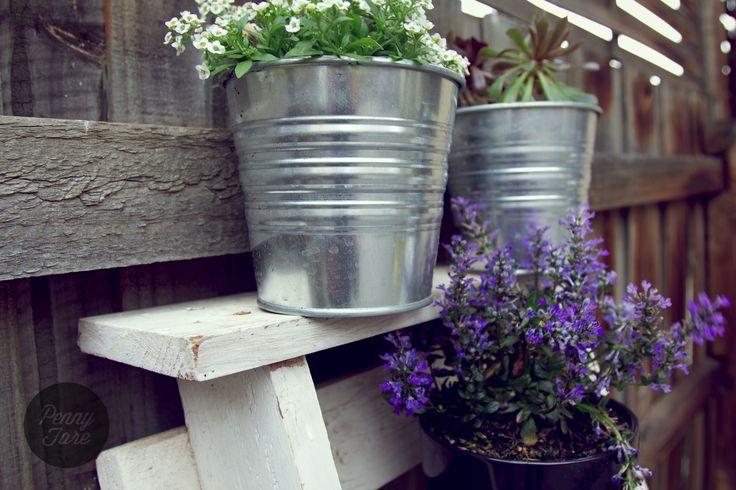Garden ladder, potted colour