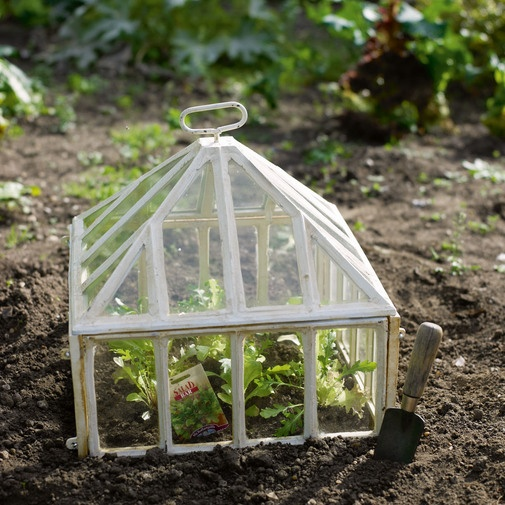 Victorian Cloche from Cox & Cox  A stunning miniature greenhouse for protected, quick-growing plants, with an antique feel in cast iron and thick glass.