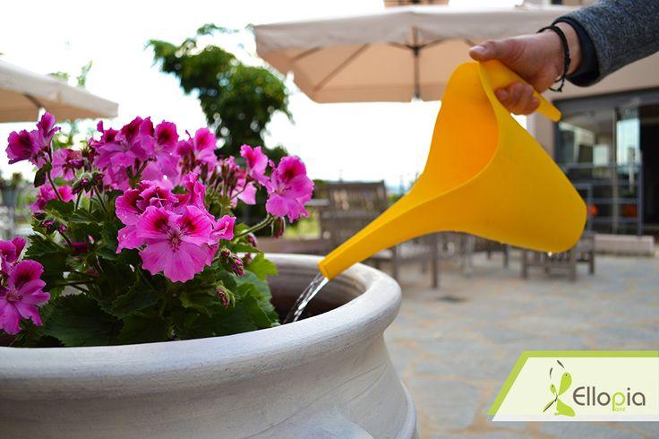 Το καλοκαίρι είναι η αγαπημένη μας εποχή και κάθε μέρος του Ellopia Point το αποδεικνύει!