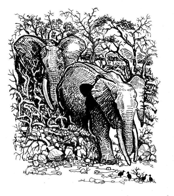 African Elephants and Natal Spurfowl illustrated by Tony Stakes
