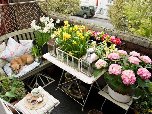 Auch Auf Dem Balkon Kann Ein Echtes Blumenmeer Entstehen. Denn Ist Der  Platz Auch Noch