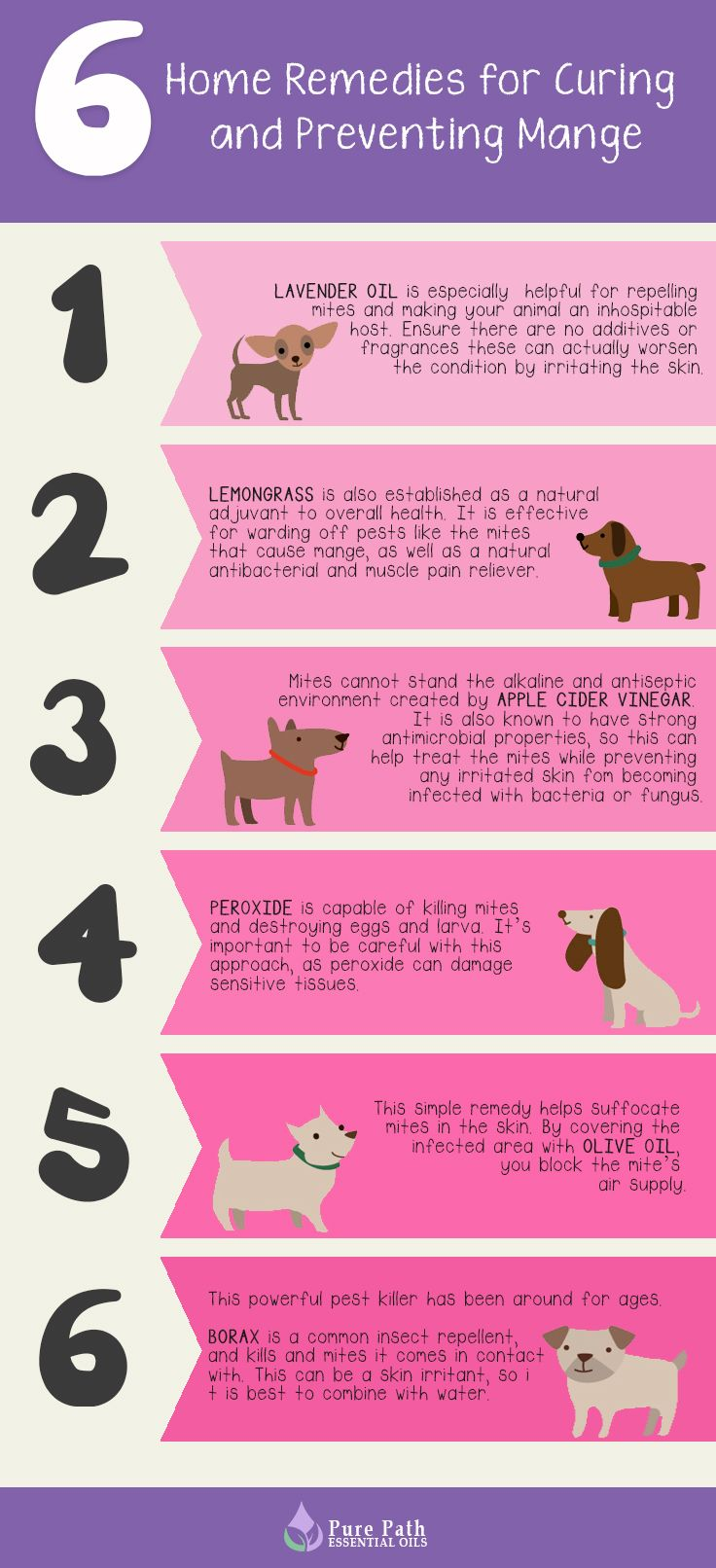 6 home remedies for curing and preventing mange home