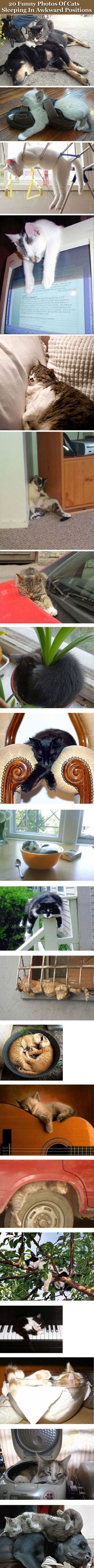 20 Funny Photos Of Cats Sleeping In Awkward Positions cute animals cat cats adorable animal kittens pets kitten funny pictures funny animals funny cats: