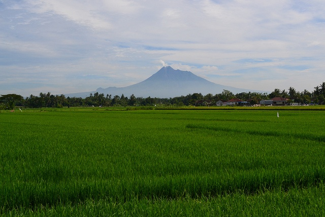 Beautiful paddy field with Mount Merapi in the background, Yogyakarta, Indonesia