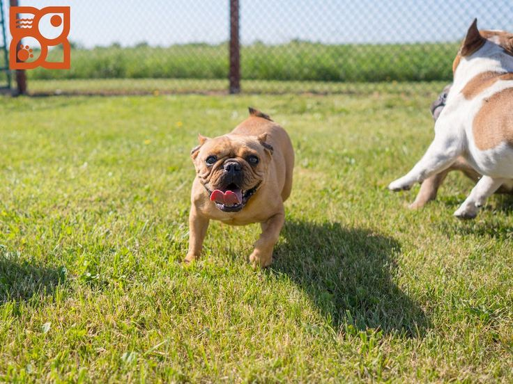 Petland puppies for sale texas