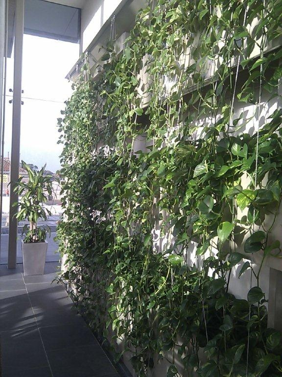42 Best Images About Living Green Wall On Pinterest