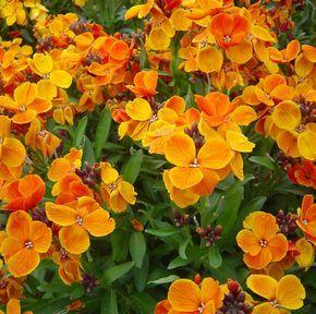 Plantas para el invierno resistentes al frío | ECOagricultor