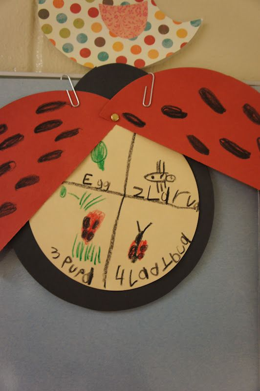 Kindergarten Khronicles: Plants, Insects and SpRiNg! (Ladybug Lifecycle)