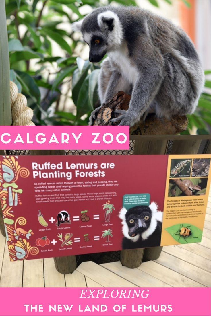 Visiting The Calgary Zoo And The New Land Of Lemurs Habitat Calgary Canadian Travel Zoo