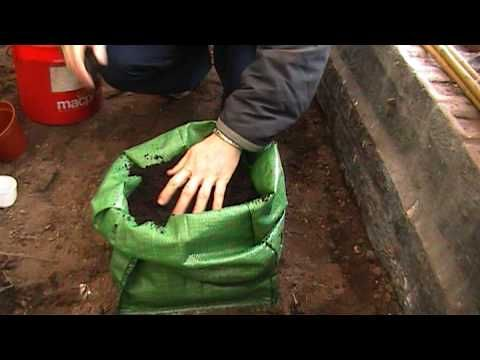 how to grow potatoes video