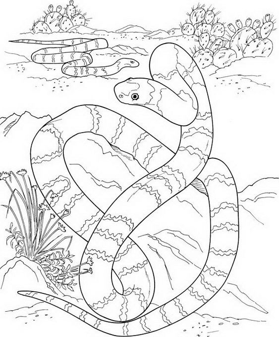 The 125 best snake coloring pages KIDS images on Pinterest ...
