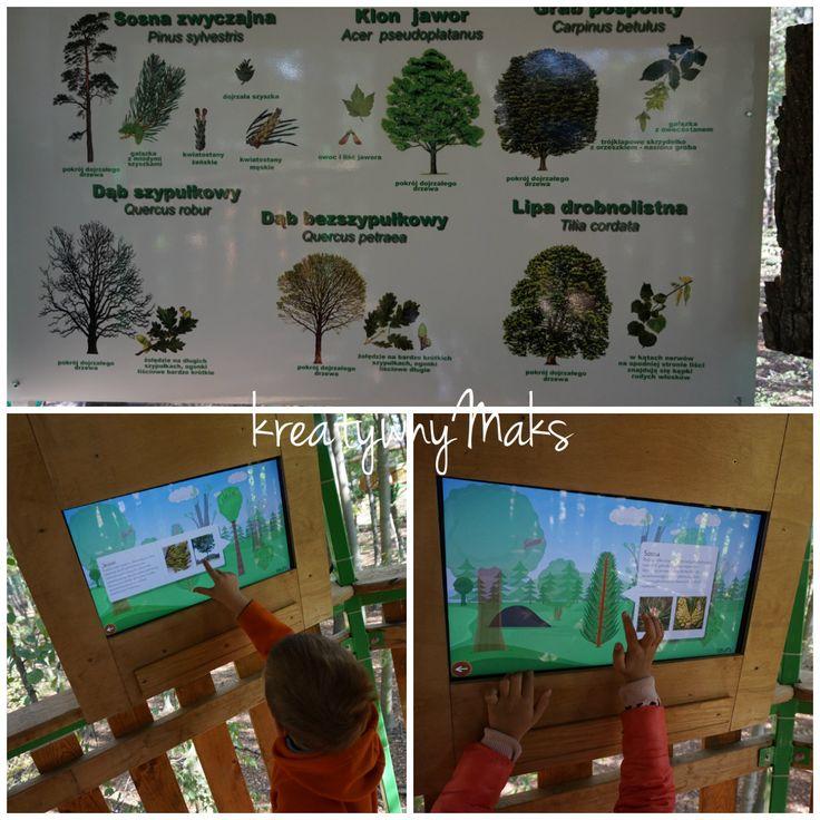 kreatywnyMaks: Spacer w konarach drzew