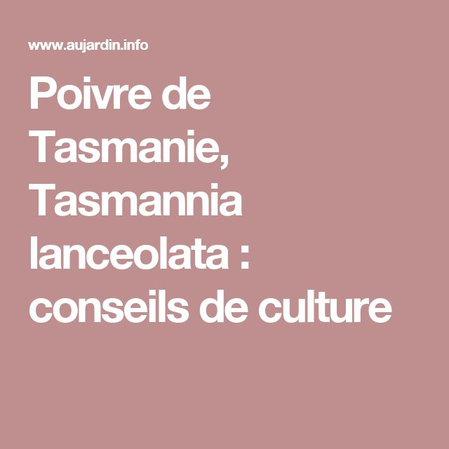 Poivre de Tasmanie, Tasmannia lanceolata : conseils de culture