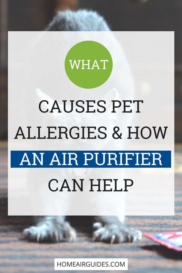 Do Air Purifiers Work For Pet Allergies I E Help With Cat