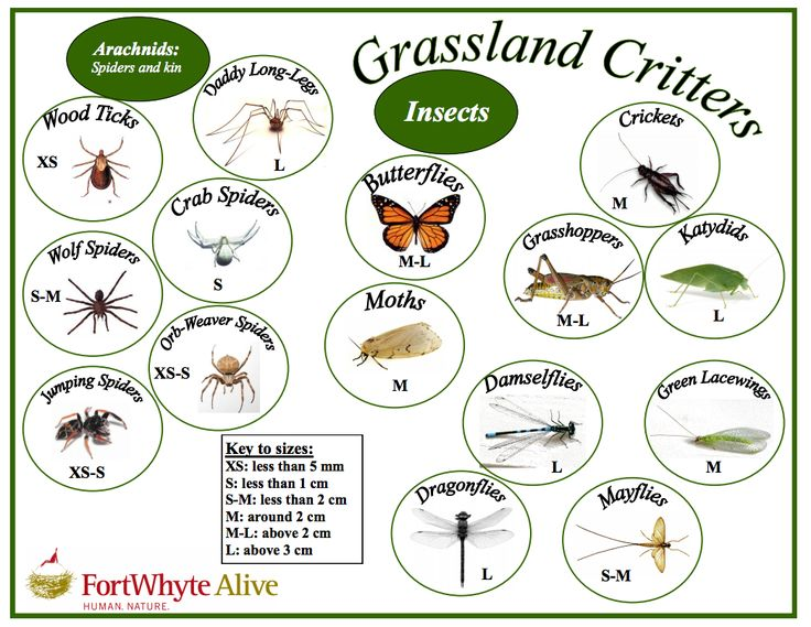 Grassland Critter key - identify bugs and critters that you find in the grassland!