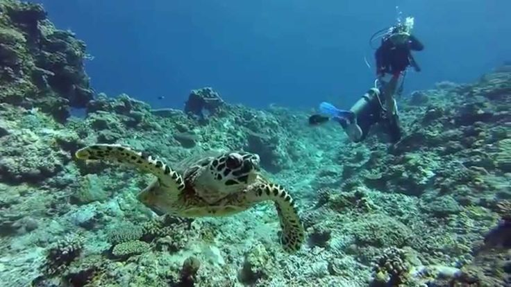 gopro red filter philippines | Diving Apo Reef in Mindoro Philippines HD - WATCH VIDEO HERE -> http://pricephilippines.info/gopro-red-filter-philippines-diving-apo-reef-in-mindoro-philippines-hd/ Click Here for a Complete List of GoPro Price in the P