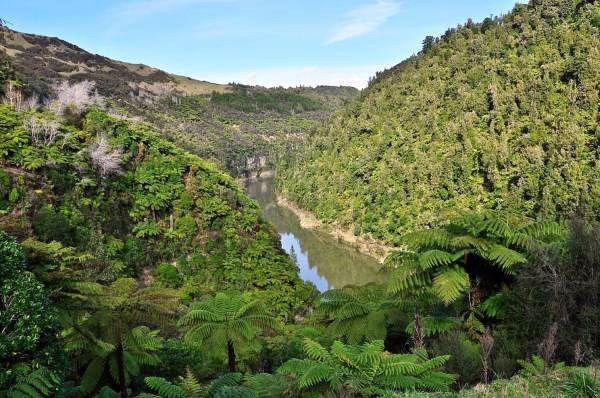 Fiume Whanganui