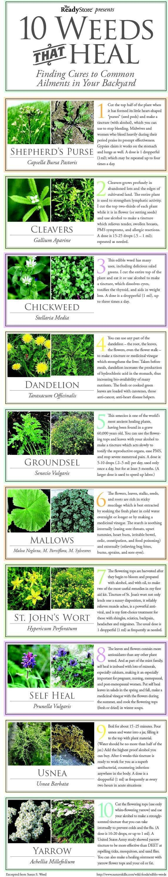 Top 10 Weeds That Heal - INFOGRAPHIC - Shepherd's Purse, Cleavers, Chickweed, Dandelion, Groundsel, Mallows, St. John's Wart, Self Heal, Usnea, Yarrow.