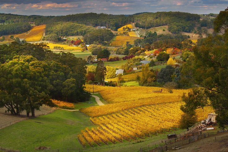 A view across the Piccadilly Valley on an Adelaide Hills Autumn day. South Australia Photo courtesy of Dragan Radocaj
