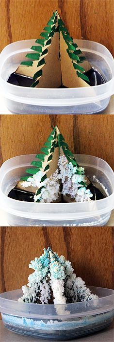 Grow your own crystal Christmas tree: fun science experiment for kids for the holidays.