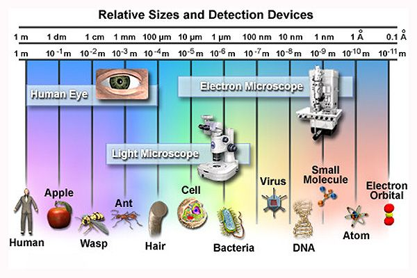 computer viruses vs biological viruses Definition of computer virus:  as a digital equivalent of biological microorganisms,  propagation of computer viruses is a serious crime in many countries.