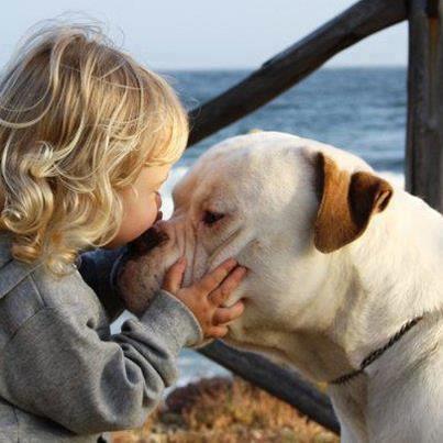 Sweetest kiss-American Bulldog