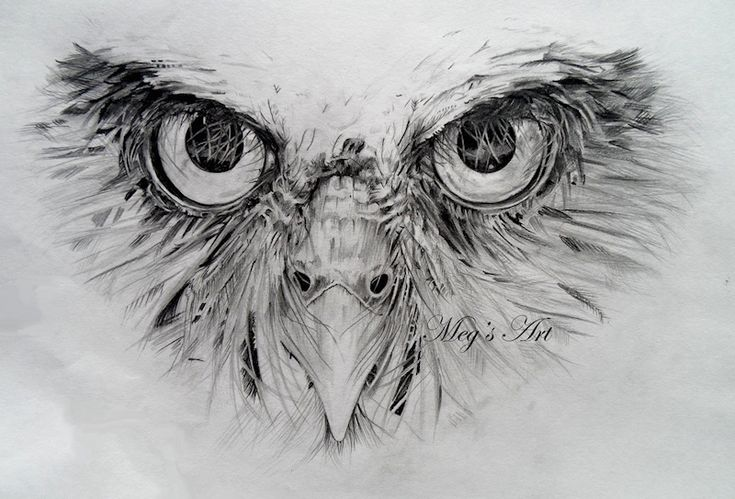 Owl Face pencil drawing (in progress) - Picture 1 in 2D media: Megan Humphries -