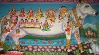 Simbol al vieţii, al generozităţii divine a pământului, vaca este respectată şi venerată în India de milioane de hinduşi care o văd ca pe o ...