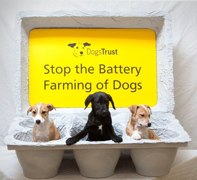 Dogs Trust - Battery Farmed Dogs Campaign (Puppy Farming)
